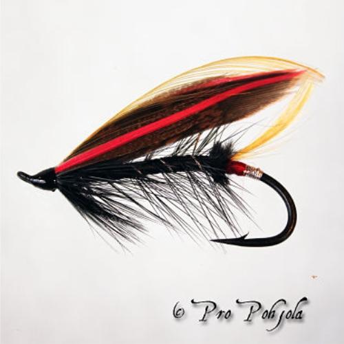 Koddifly
