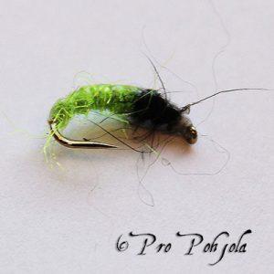 Larvat ja Pupat