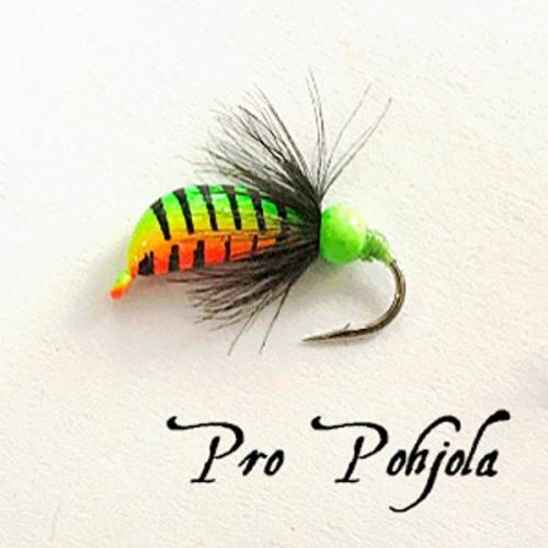 Pro Pohjolan morripilkki (125)